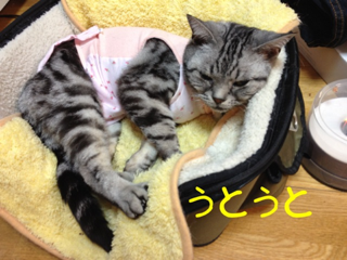 image-20120317235319.png